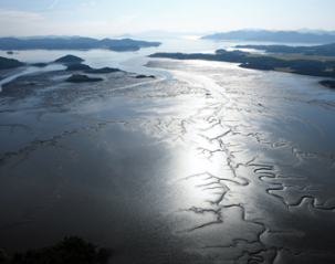 mudflat of korea