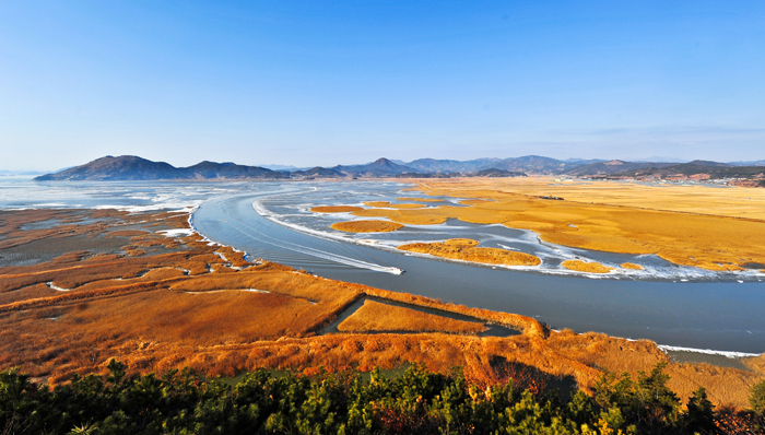 Suncheon Bay mudflat with various halophyte plants